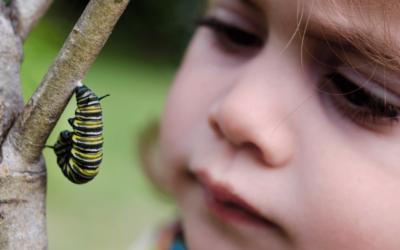 The Caterpillar Died