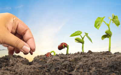 Planting the True Seed